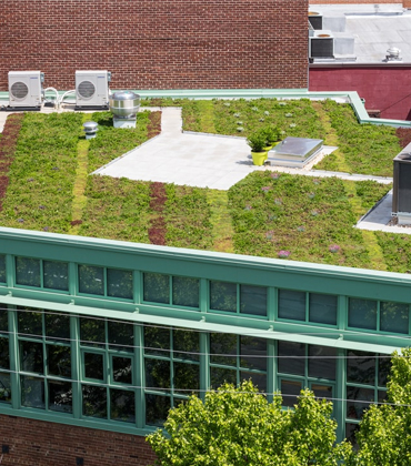 Factors to Consider for a Vegetative Roof